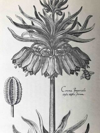 Hortus Floridus; The First Book, Contayninge a very lively and true Description of the Flowers of Springe.