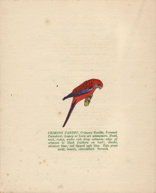 """""""Scratch Cocky"""". A Booklet of the Bright Birds of Our Bushland Pictured in Colour and Rhyme for the Children."""