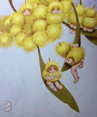 Wattle Babies. May GIBBS.